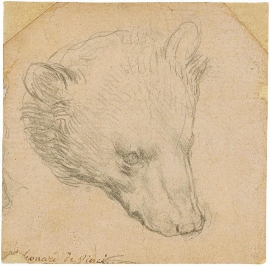 La testa di orso di Leonardo