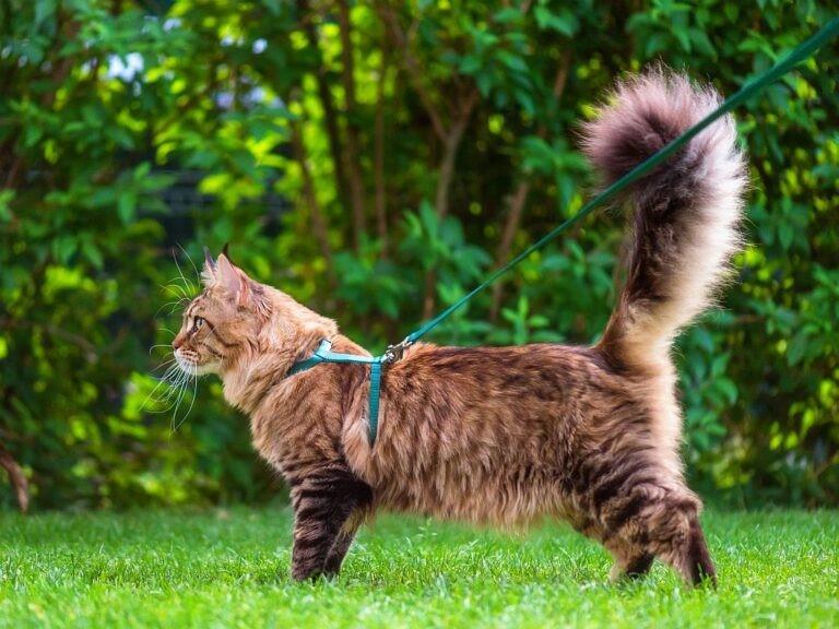 gatti guinzaglio moda
